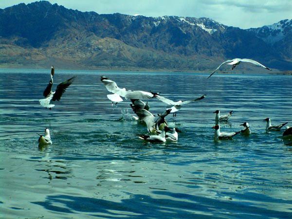 Озеро Палгон